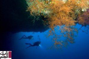 يستعد الباحثون لكشف لغز عظيم حول المحيط 2020