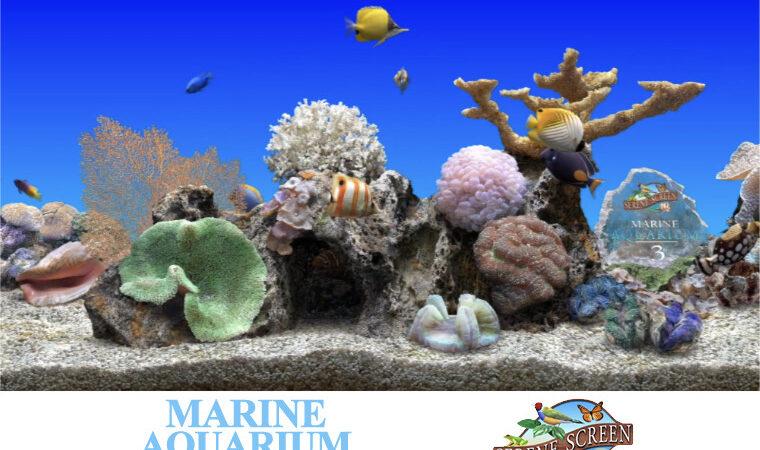 1539514307 marine aquarium